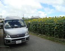 o_himawari
